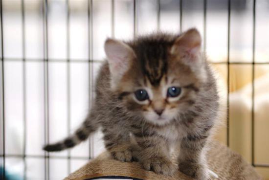bernie sanders cat