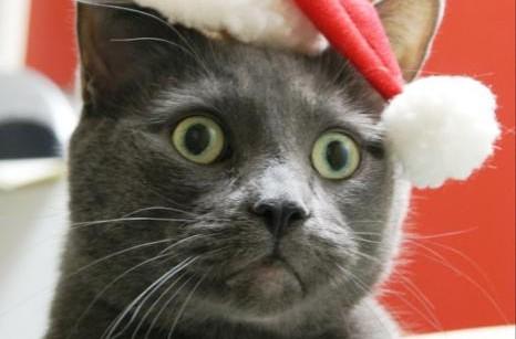 Kitten Christmas_466x546