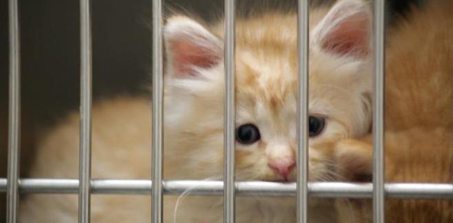 Kitten3_660x442