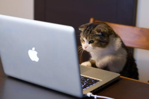 Cat reading veterinary blog