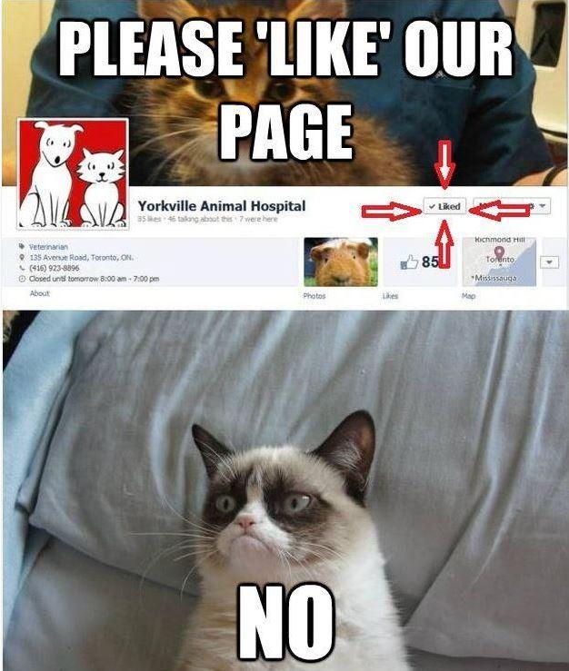 Grumpy cat facebook page