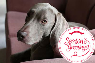 image for 10 Holiday Specials to Watch With Your Pets