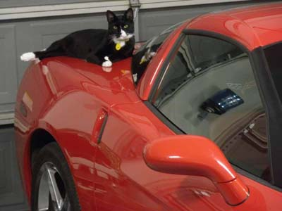 image for Cats in the Car: Tips on Transporting Your Cat to the Veterinary Hospital