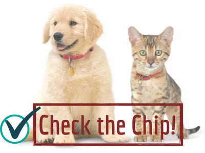 image for August 15 is National Check the Chip Day!