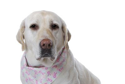 image for Breast Cancer Awareness and Your Pets