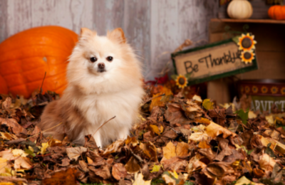 image for Thanksgiving Safety Tips for Pets