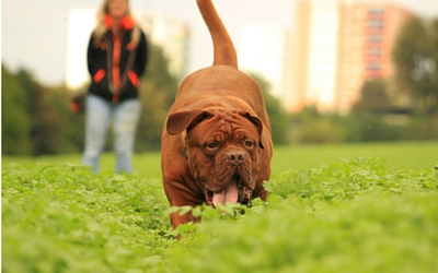 image for Top 10 Household Poisons for Dogs