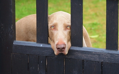 image for Does your dog have separation anxiety?