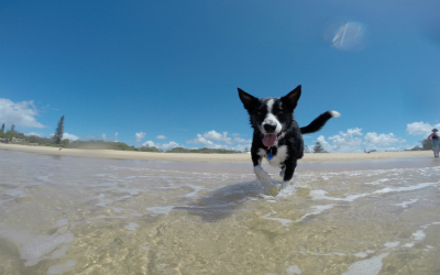 image for 5 summer vacations you can bring your dog on